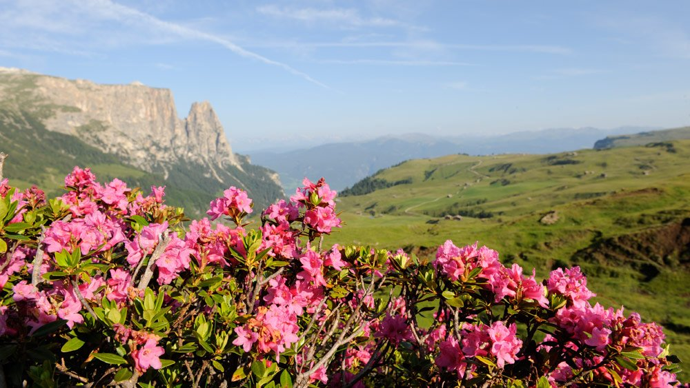 Holidays in March/April: spring awakening in Fiè allo Sciliar
