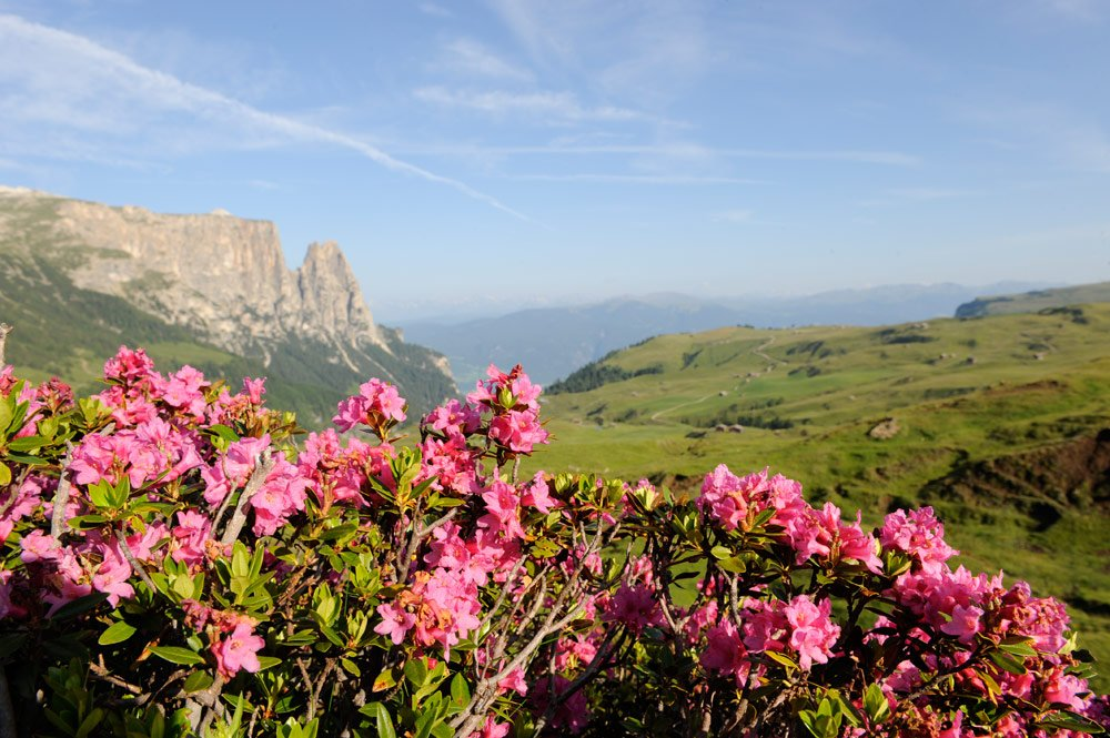 Summer holidays in the Dolomites - Nature experiences in the UNESCO World Natural Heritage